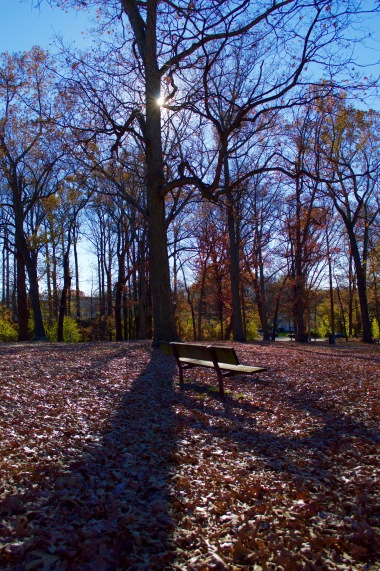 A lone bench sits among the fallen leaves.