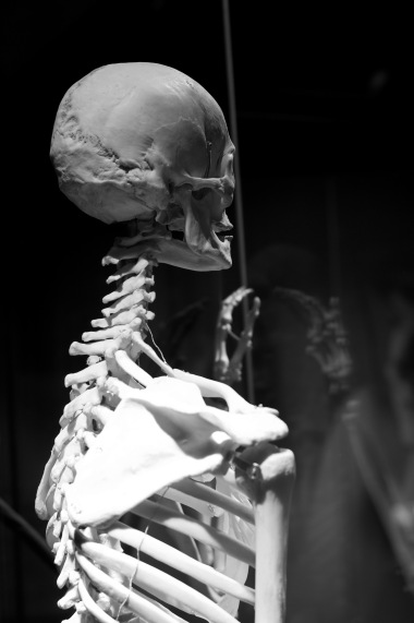 Bones constantly being hidden, trapped in a box craving the touch of outside.